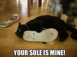 Black Cat Memes - Photos | Facebook