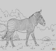 Veterinarian Coloring Page Coloring Pages Free Printable Coloring