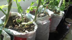 garden in a bag. Update #2 Make Free DIY Self Watering Grow Bag For Vegetable Gardening - YouTube Garden In A
