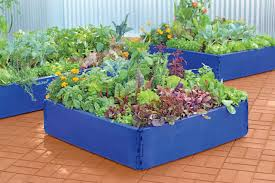 bright blue raised beds
