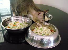 Easy Healthy Homemade Cat Food