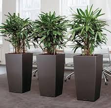 modern office plants. bropflanzen office plantsindoor plantscanmodern modern plants m
