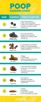 How To Stop Diarrhea In Dogs 4 Simple Steps