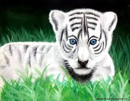 baby white tigers with blue eyes. View Original Size Baby White Tiger Wallpaper With Blue Eyes Amazing Wallpapers For Tigers