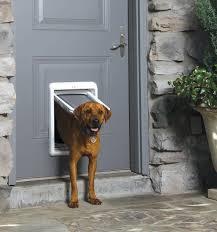 need a pet door