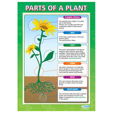 The Basic Structure Of A Flowering Plant Lifeofaplant
