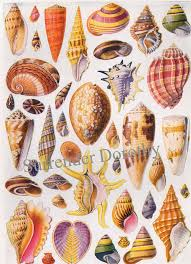 Seashell Chart The Worlds Most Recently Posted Photos Of Mussel And Whelk