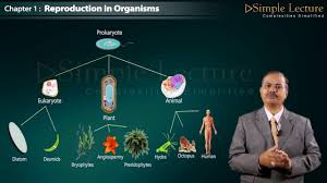 Biology Class 12 Chapter 1 Reproduction in Organism - YouTube