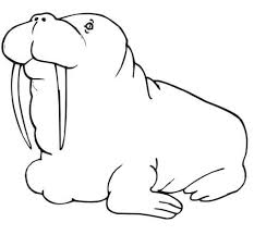 Small Picture Fat Walrus coloring page Free Printable Coloring Pages