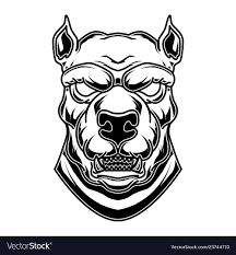 Pitbull Head In Engraving Style Design Element Vector Image