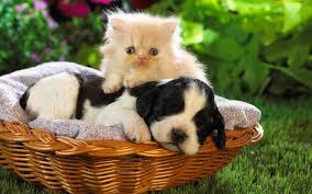 Cute Baby Animal Wallpapers ...