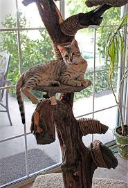 Awesome Cat Tree Decoration