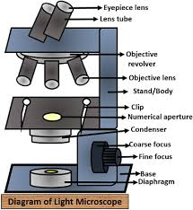 Difference Between Light And Electron Microscope With