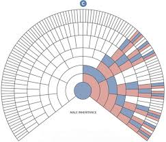 X Chromosomal X Dna Testing The Family Tree Guide To Dna