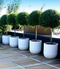 extra large pots for trees - Google Search More