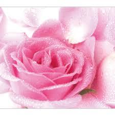 3d Hal Muurschilderingen Roze Roos Bloem Bloemen Hd Behang Foto Met