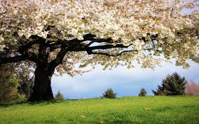 early spring wallpaper hd. Plain Early Spring_wallpaperjpg To Early Spring Wallpaper Hd