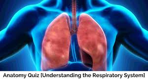 anatomy quizzes archives parallel coaching uk s 1 personal anatomy quiz understanding the respiratory system