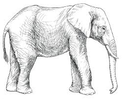 Elephant Coloring Pages For Kids At Getdrawingscom Free For