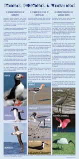 Comparing Seabirds Shorebirds And Wading Birds