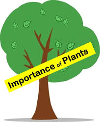 Importance of Plants to humans and animals in everyday's life - YouTube