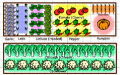 Small Picture Plan a Vegetable Garden Home Garden layout when Planning to grow