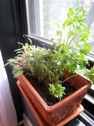 edible plants for windowsill gardens