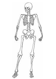 Small Picture Coloring Page Skeleton Sheet Anatomy For Kids Sheets Free Skeletal