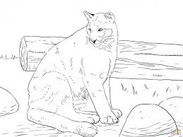 mountain lion coloring pages printable 75997