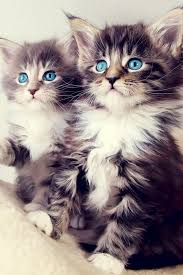 cute kittens wallpapers for mobile. Wonderful For Cute Kittens 2 Mobile Wallpaper 941 Views Preview  1090 Views And Wallpapers For
