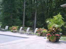 pool landscaping around above ground pools tropical plants best banana trees in pots images on