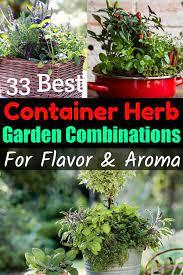 container herb garden cooking herbs