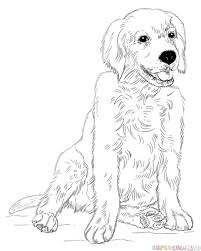 Small Picture How to draw a Golden Retriever Puppy Step by step Drawing tutorials