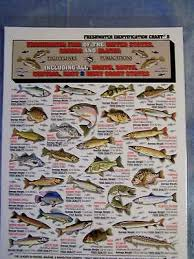 Freshwater Fish Identification Chart Freshwater Fish Identification Id Chart Tightline Tightlines Publications 8 738875000213 Ebay