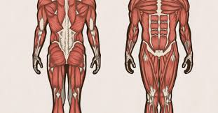 Anatomy Resource Guide For Nursing Students 2019