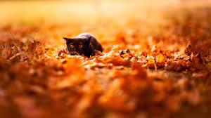 Autumn Cat Desktop Wallpapers - Top ...