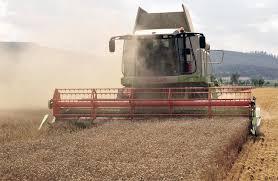 Технология выращивания озимой пшеницы ru Уборка пшеницы