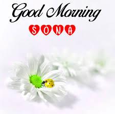 best flower good morning sona pics hd
