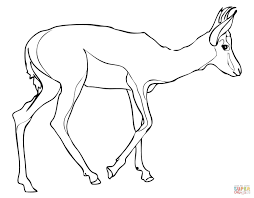 Small Picture Springbok coloring page Free Printable Coloring Pages