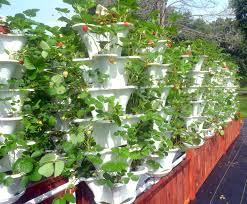 container garden vegetables. Elegant Container Gardening Vegetables In The Philippines Garden