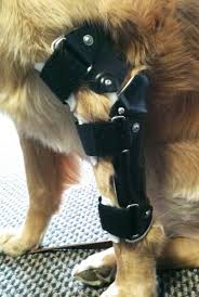 valgus dog. elbow orthosis valgus dog