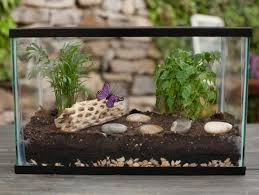how to make your own terrarium. Beautiful How Create A Terrarium And How To Make Your Own O