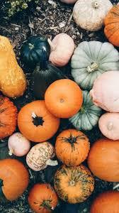 Pumpkin Tumblr Wallpapers - Top Free ...