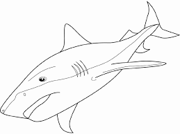 Small Picture Coloring tiger shark picture Shark things Pinterest Shark