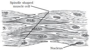 The trachea ends at the carina, a ridge of cartilage that separates and forms the junction into the bronchi. Diagrammatically Show The Difference Between The Three Types Of