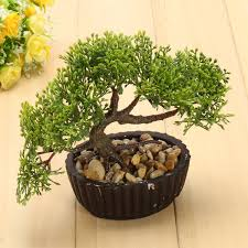 office bonsai tree.  Office Image Is Loading FLAMEPINEBonsaiTreePlantOvalPotArtificial And Office Bonsai Tree E