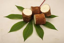 Image result for Cassava leaves