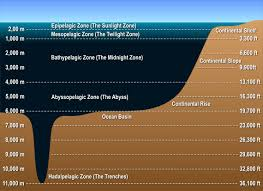 Ocean Depth Chart Layers Of The Ocean Deep Sea Creatures On Sea And Sky
