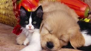 cats dogs hd wallpapers free unique 100 quality hd images