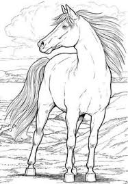 Best Of Wild Mustang Horse Coloring Pages Nichome